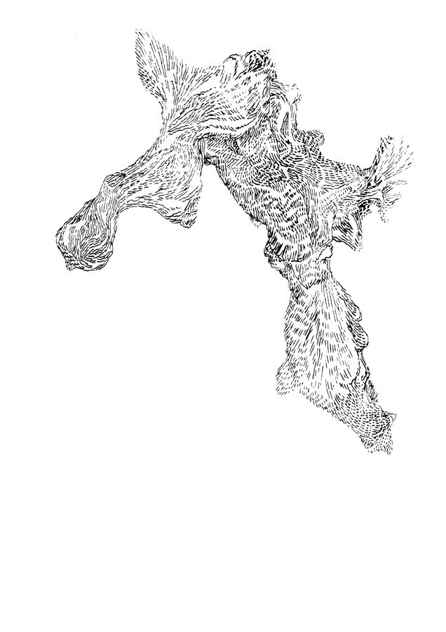 Drawings. 2011